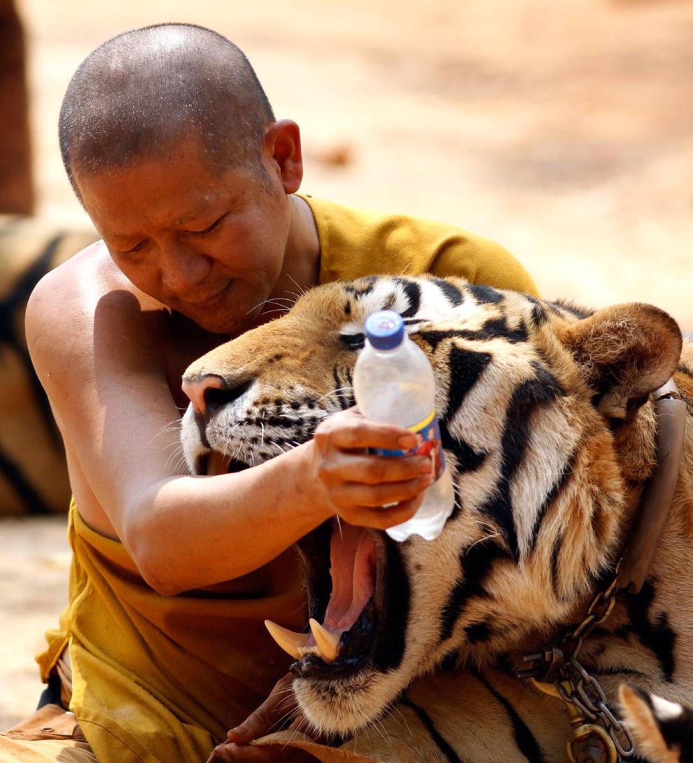 Монах и тигр
