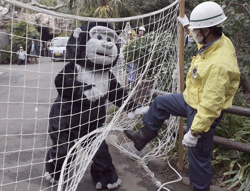 Ловят «гориллу» сетью