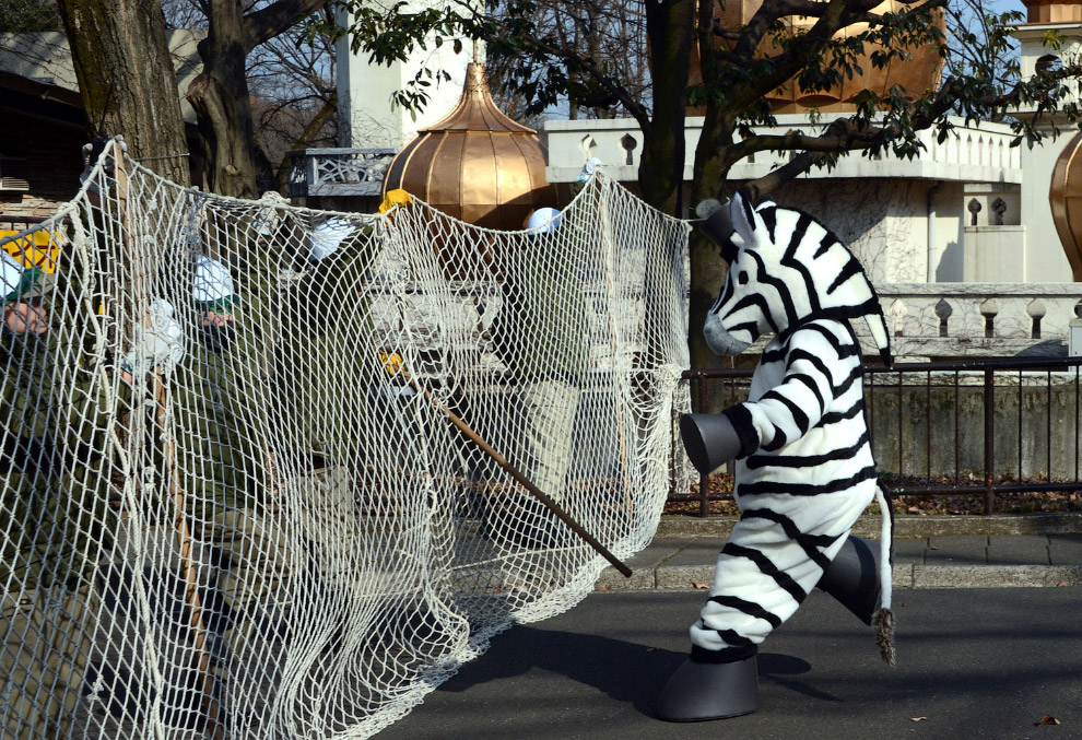 """Побег из зоопарка """"зебры"""""""
