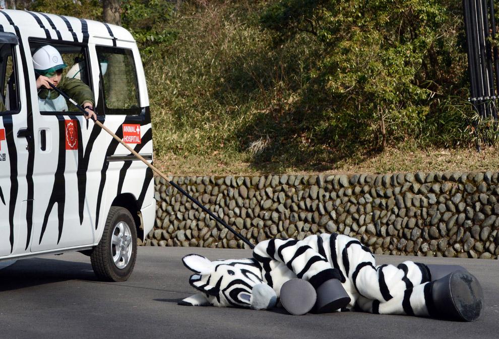 Побег из зоопарка не удался