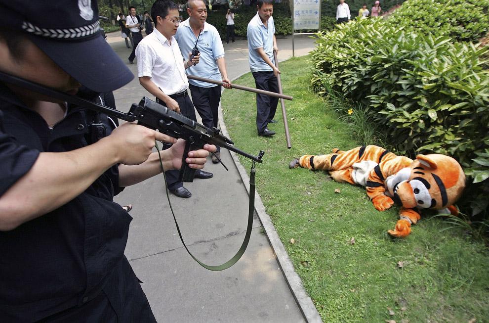Сбежавший тигр