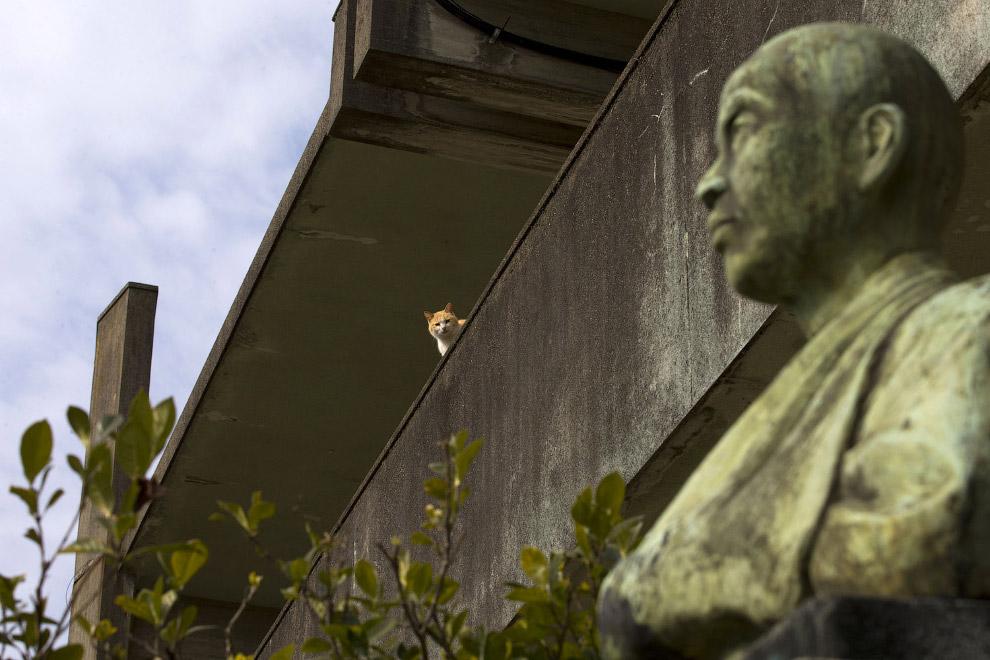 Кот в заброшенной школе на острове Аошима
