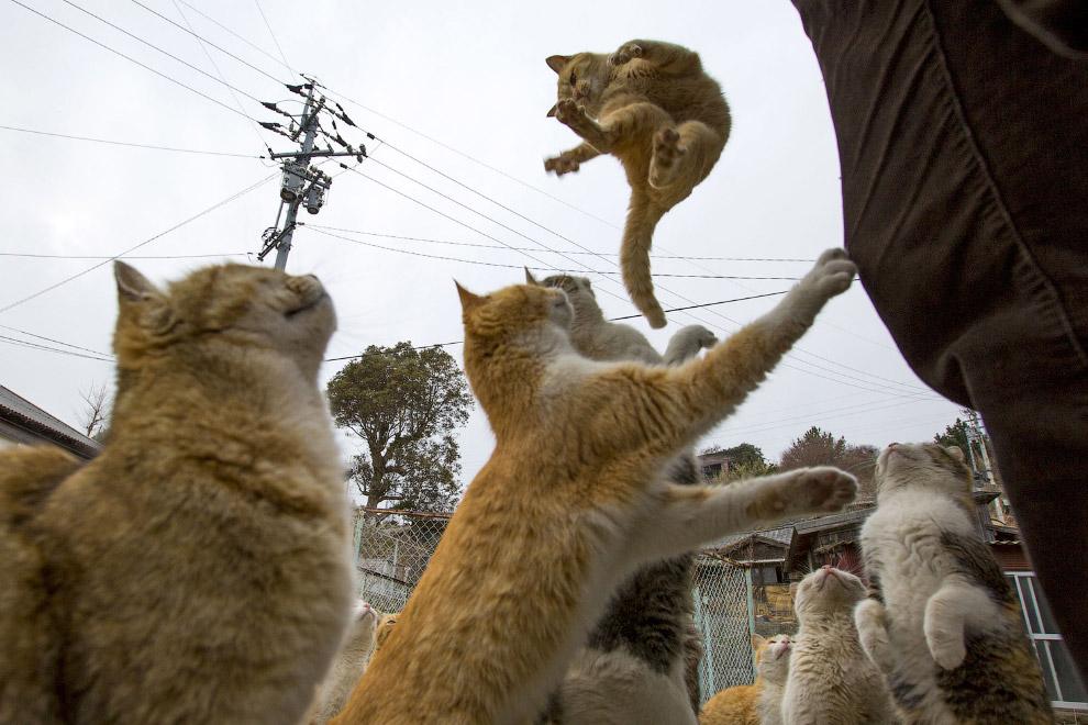 Остров кошек Аошима