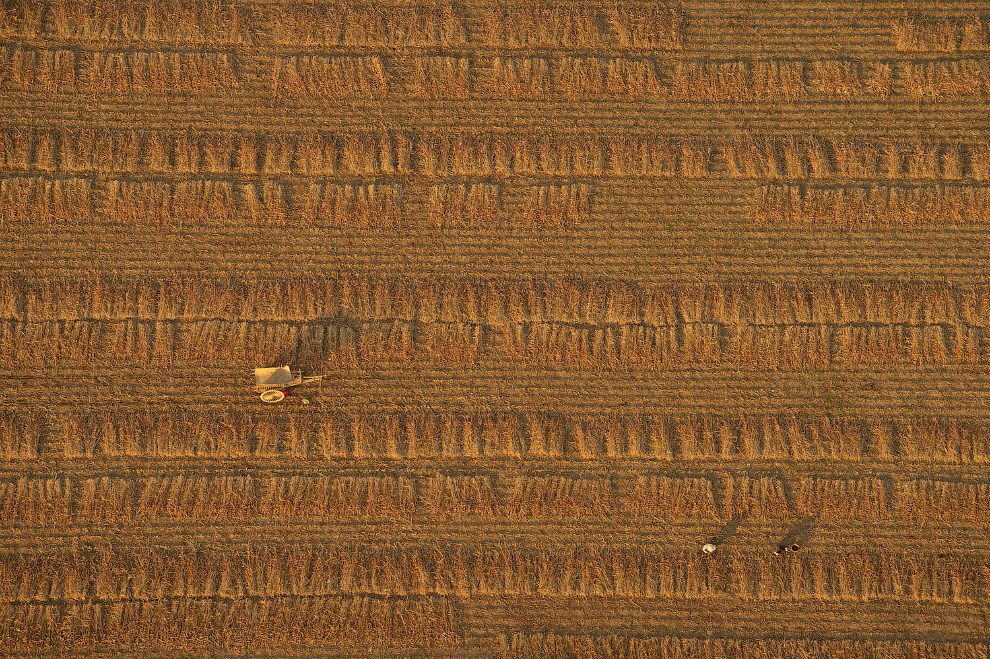 Пшеничное поле в Багане, Мьянма