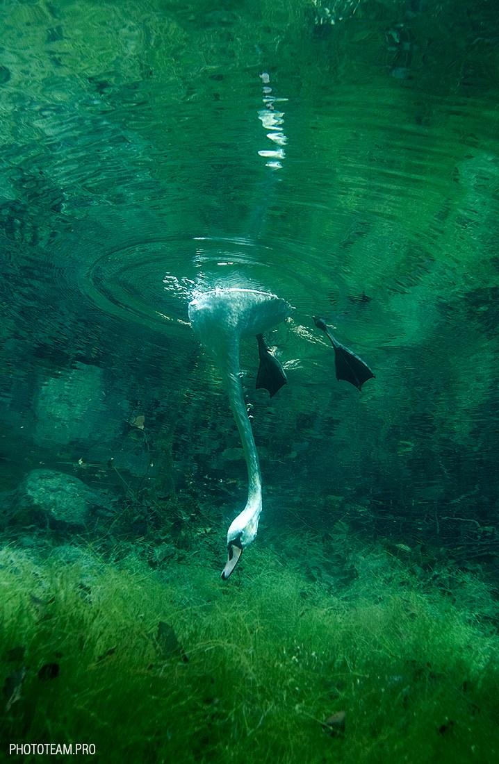 http://loveopium.ru/content/2015/03/Underwater/01.jpg