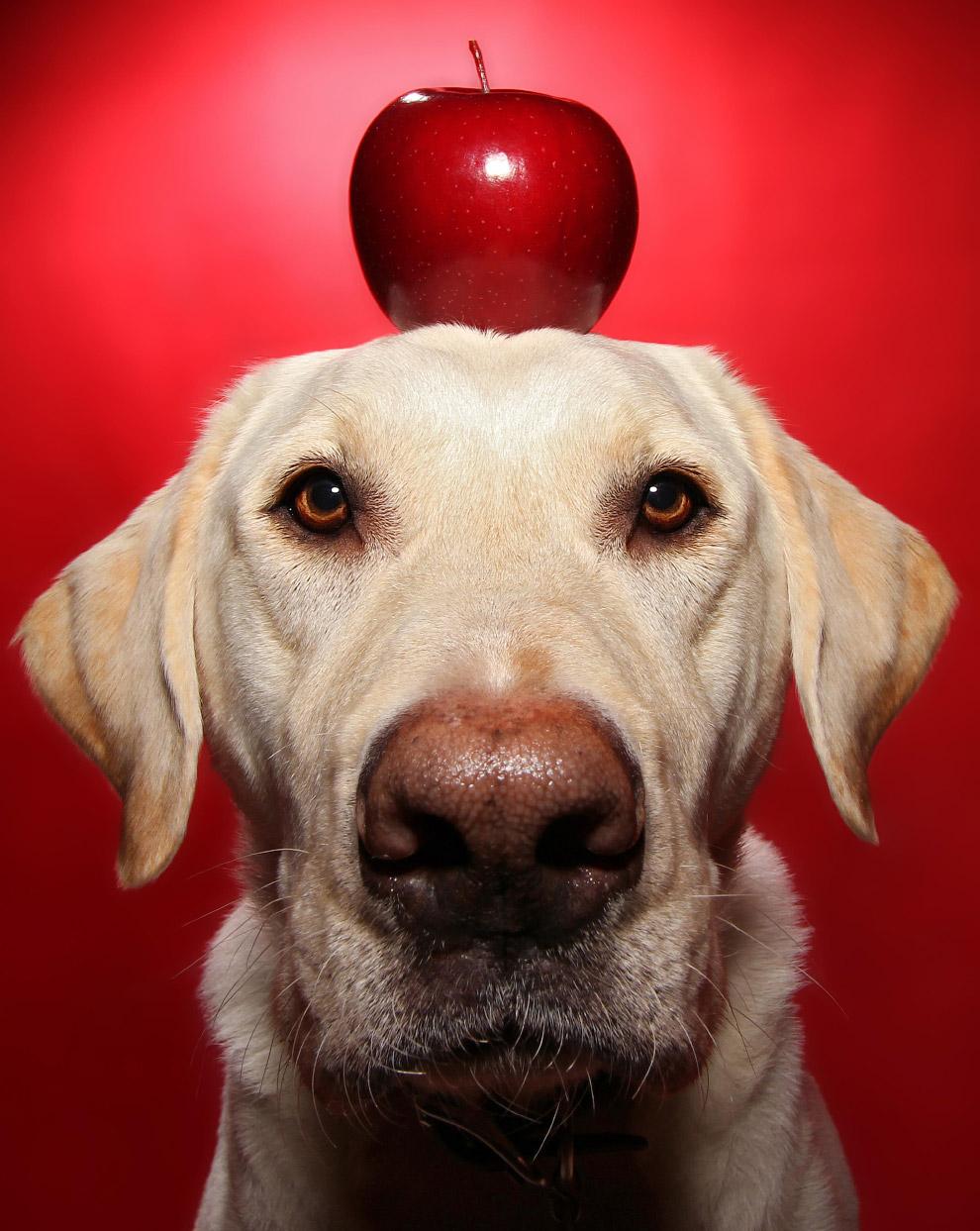 Винстон и яблоко
