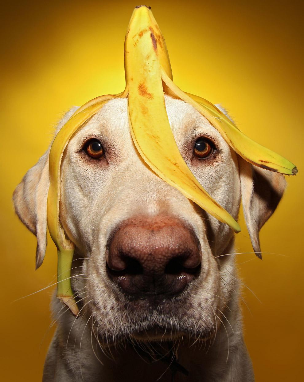 Винстон и банан