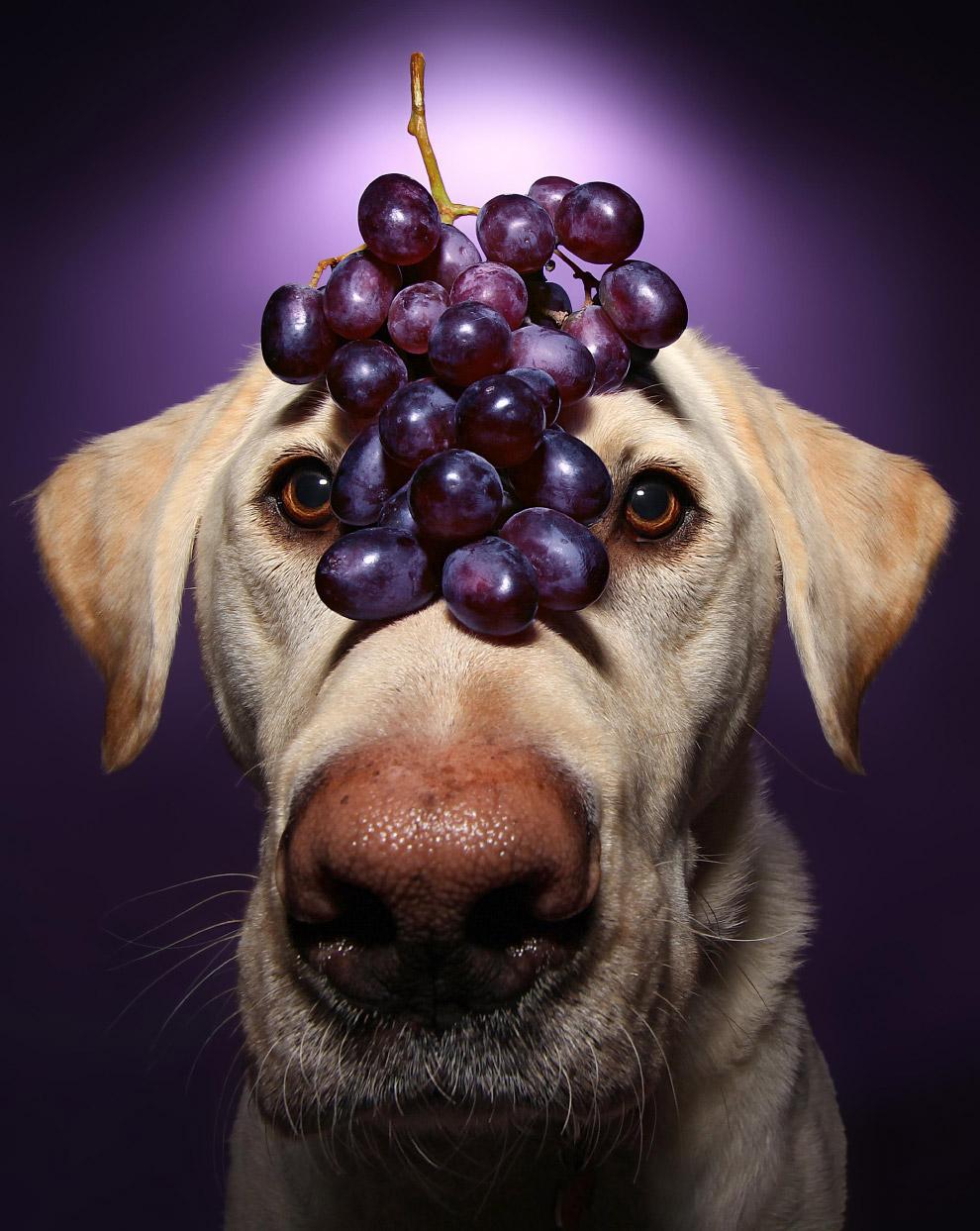 Винстон  виноград