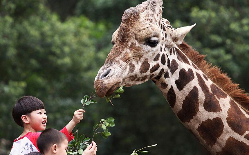Покорми жирафа