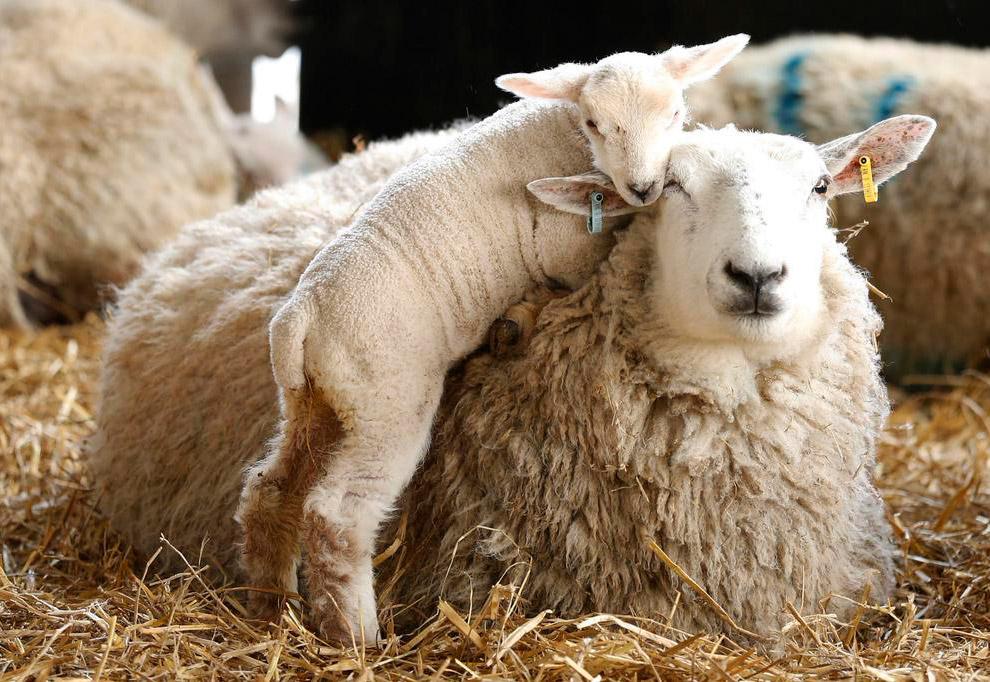 Семейный портрет на ферме в Йоркшире