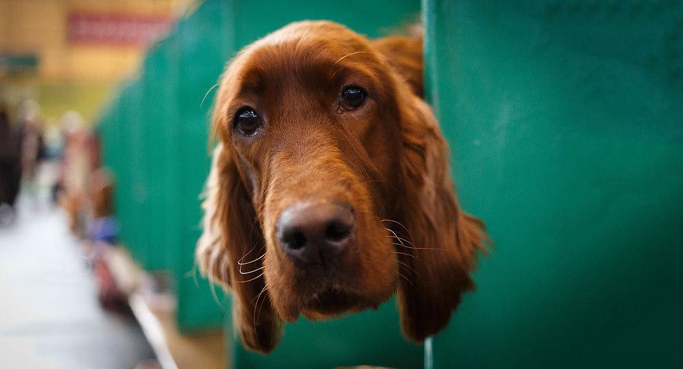 Выставка собак Крафт в Бирмингеме