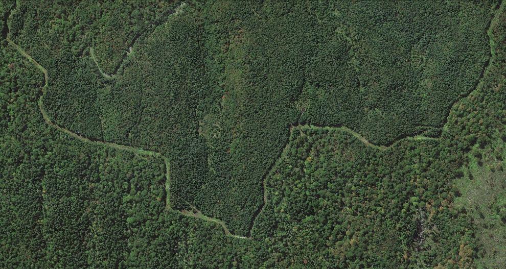 Граница США и Канады в лесу