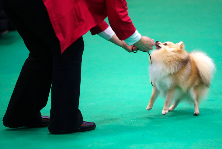 Crufts Dog Show in Birmingham, England