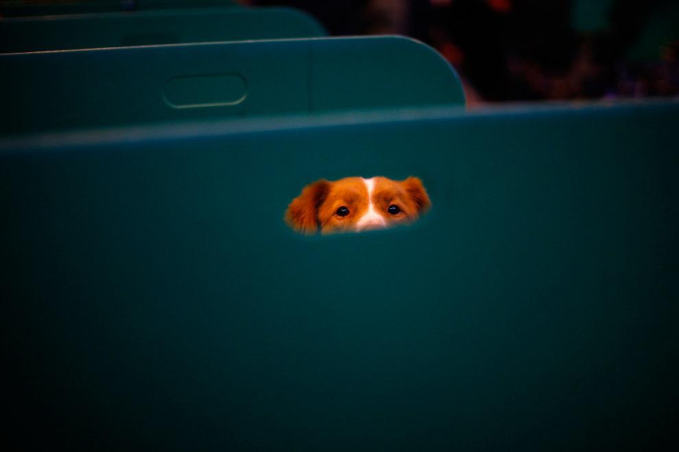 Выставка собак Crufts Dog Show