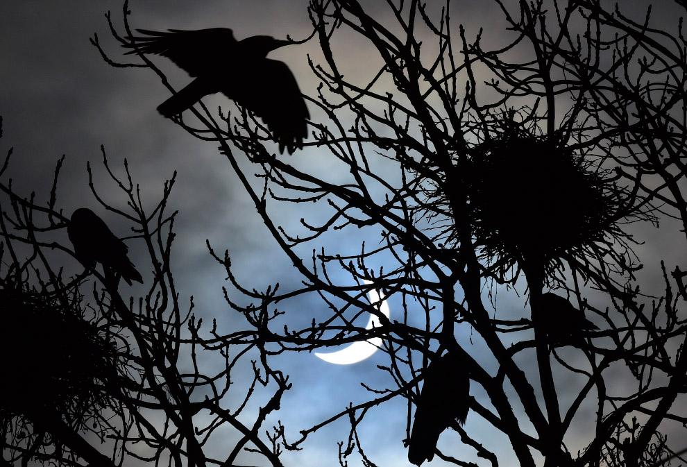 Птицы, гнездо и частичное солнечное затмение на юго-западе Англии