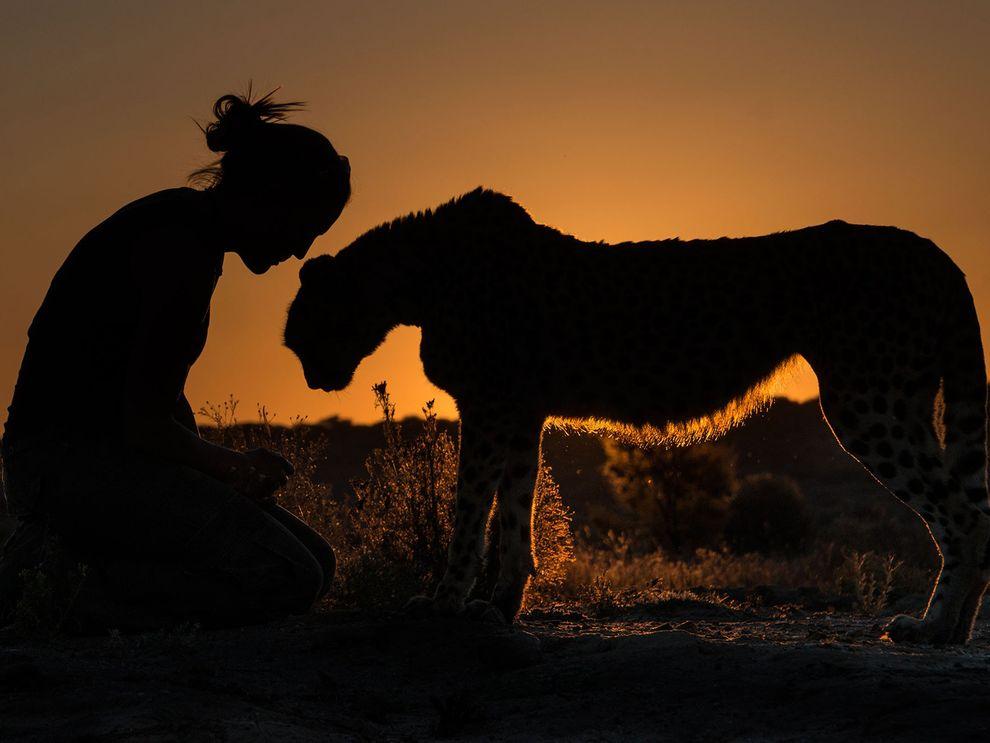 Прогулка с гепардом на закате, Намибия