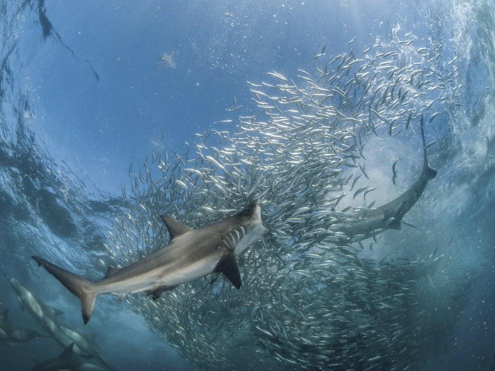 Подводная охота, Южная Африка