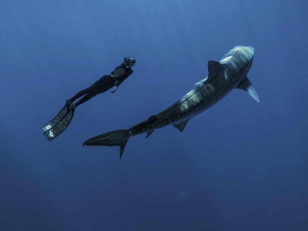 Прогулка с акулой, Гавайи