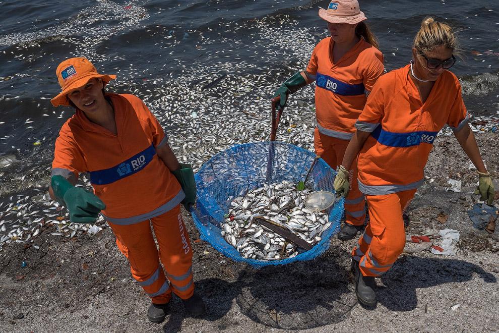 Уборка мертвой рыбы