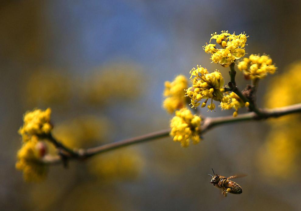 Весной просыпаются не только медведи, но и пчелы