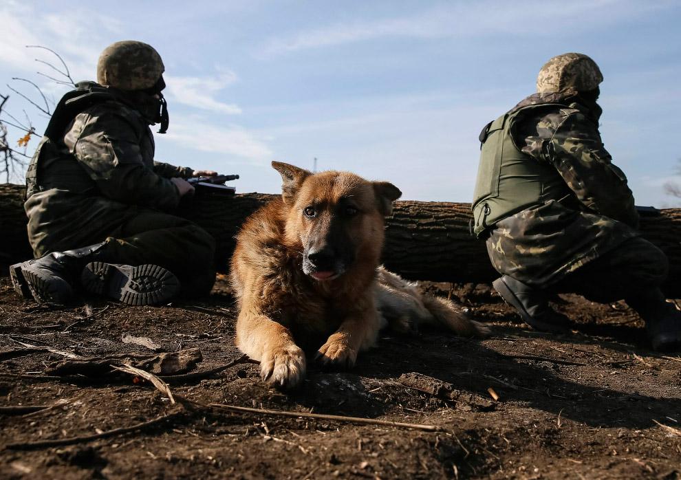 Украинские военные около города Курахово в Донецкой области