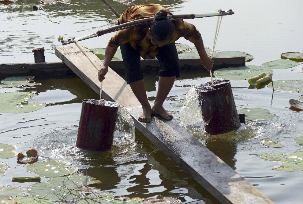 Женщина набирает воду из озера для домашних нужд, Мьянма