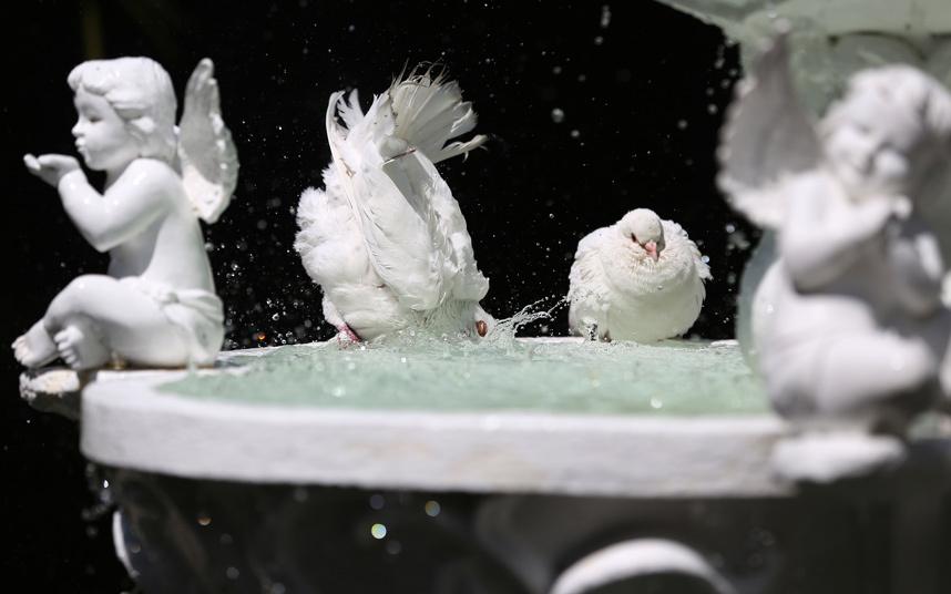 Голуби купаются в фонтане в пригороде Кесон-Сити к востоку от Манилы