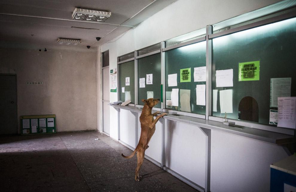 Собака в отделении банка в Дебальцево, Украина