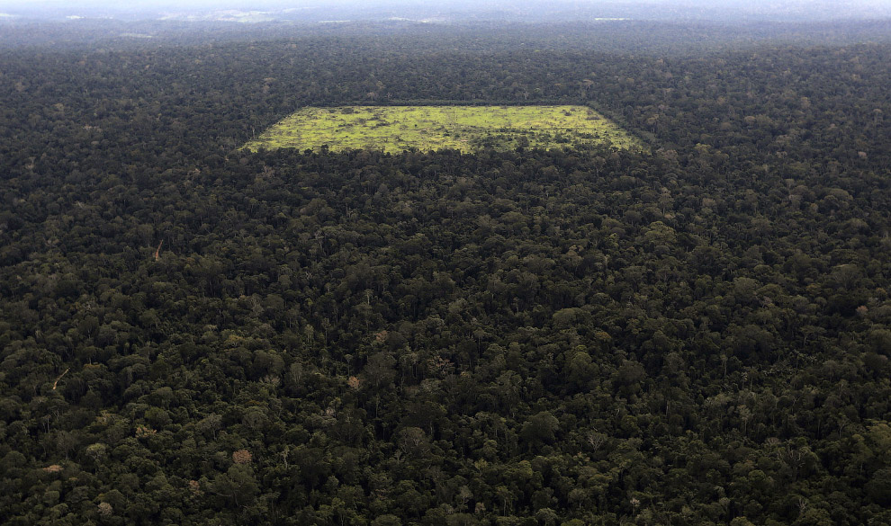 Тропические леса Амазонки и результаты действий черных лесорубов