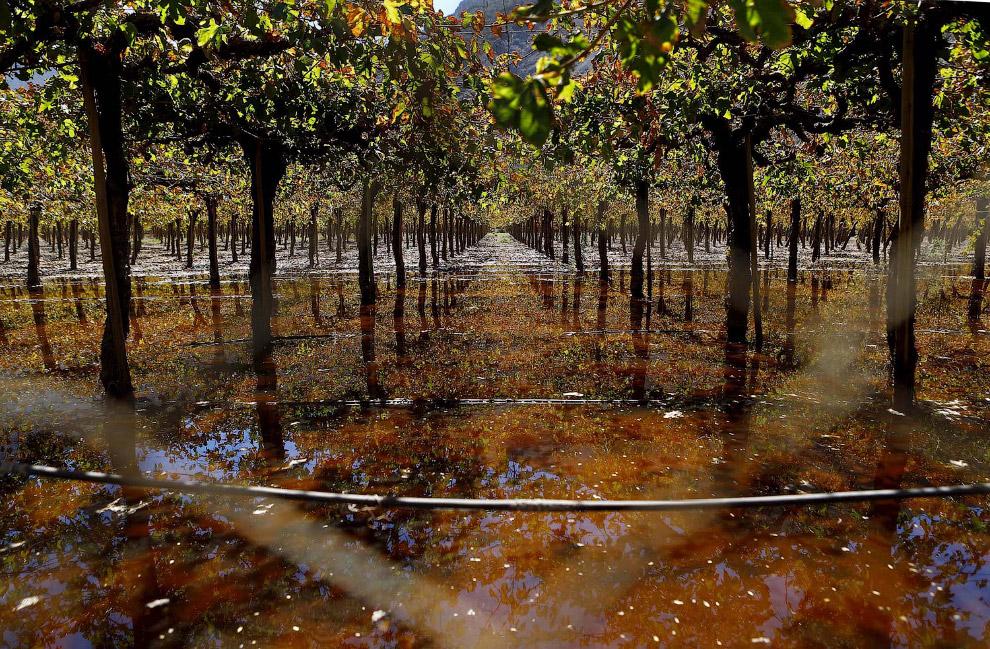Виноградные поля после наводнения