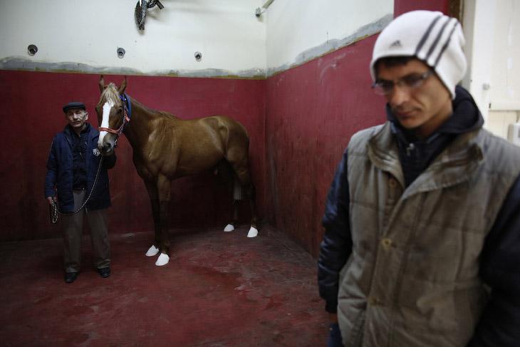 Новый пациент госпиталя для лошадей в Стамбуле