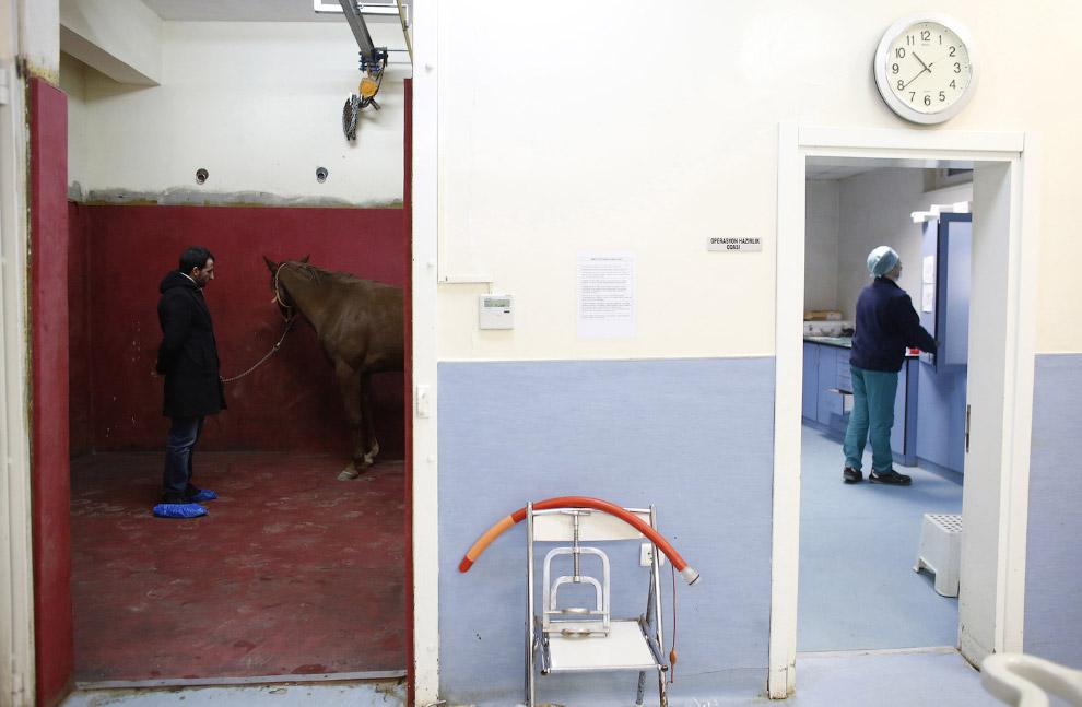 Лошадь с хозяином готовится к операции, скоро ей сделают анестезию