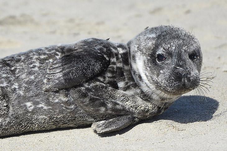 Спасение морских львов в Калифорнии