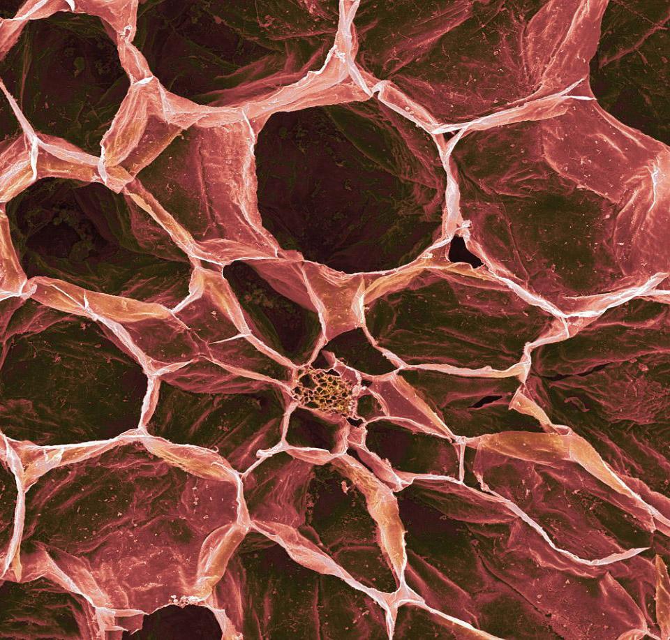 Помидоры под микроскопом выглядят не очень аппетитно
