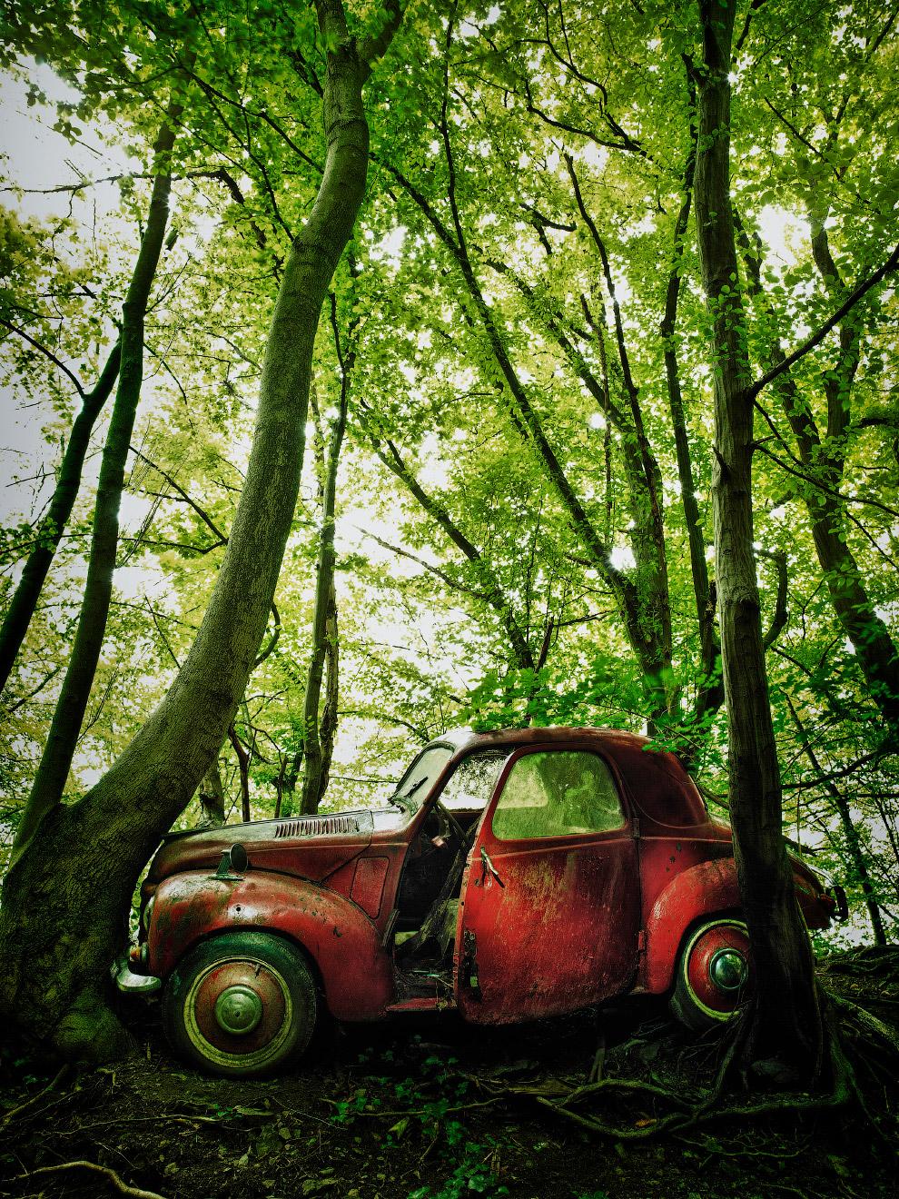 Ржавый красный автомобиль, оставленный в лесу много-много лет назад
