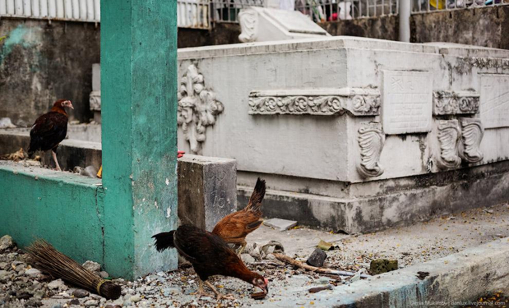 Жизнь на кладбище