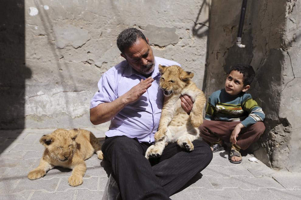 Домашние львята. Сектор Газа