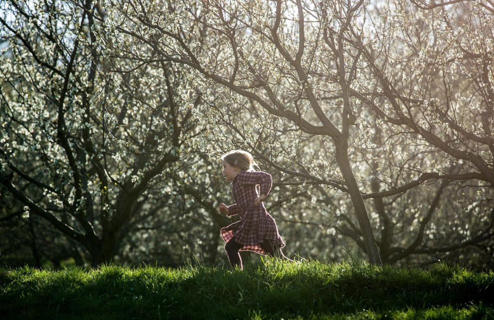 Цветение вишни в Праге