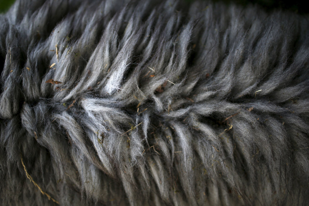 Мех альпак