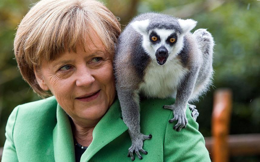 Ангела Меркель и лемур на открытии зооцентра в Германии