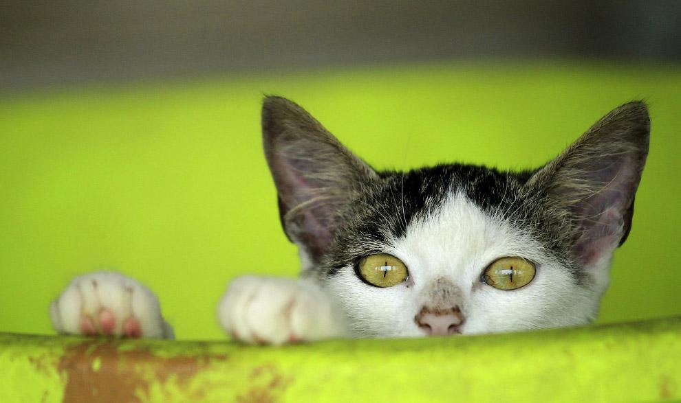 Застенчивый кот