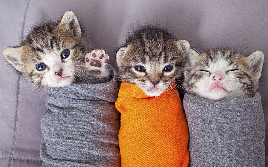 Котята в приюте для животных