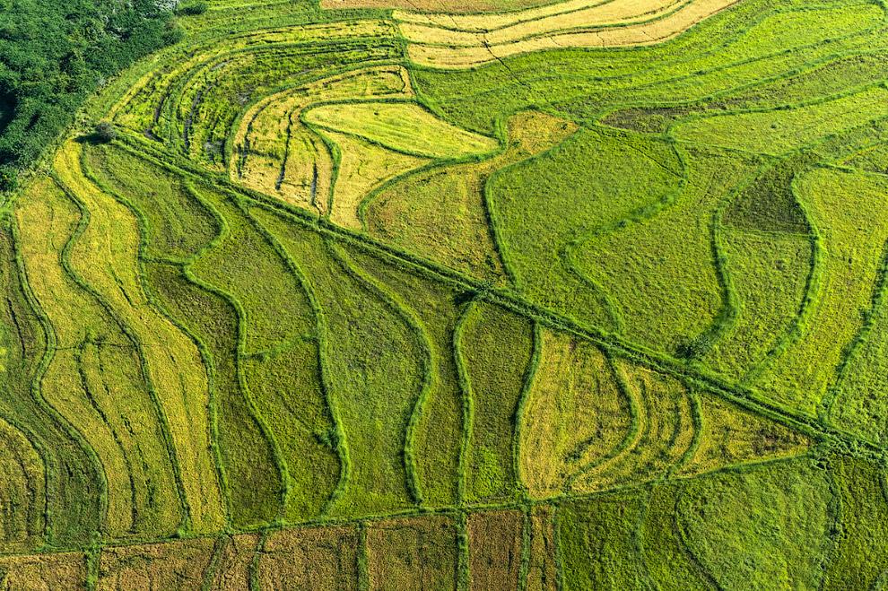 Сельскохозяйственные пейзажи. На этих землях выращивают кофе