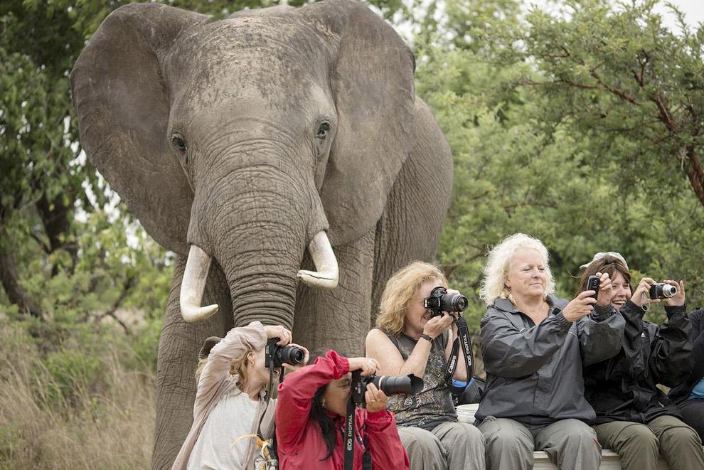 Такой «друг», как слон, может сильно оживить скучный снимок, сам того не ведая