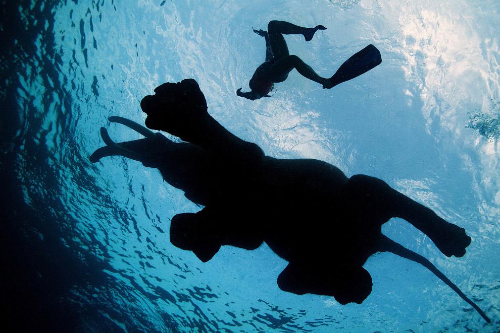 Слон плавает в Андаманских островов