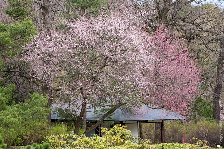 Японский сад Главного Ботанического сада