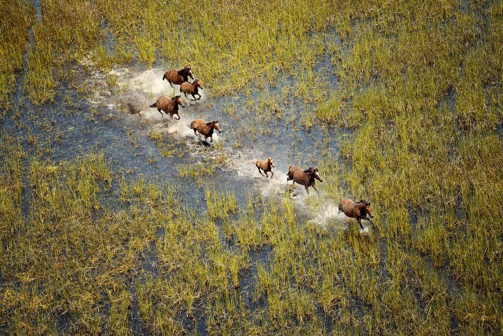 Дикие лошади в Западной Австралии