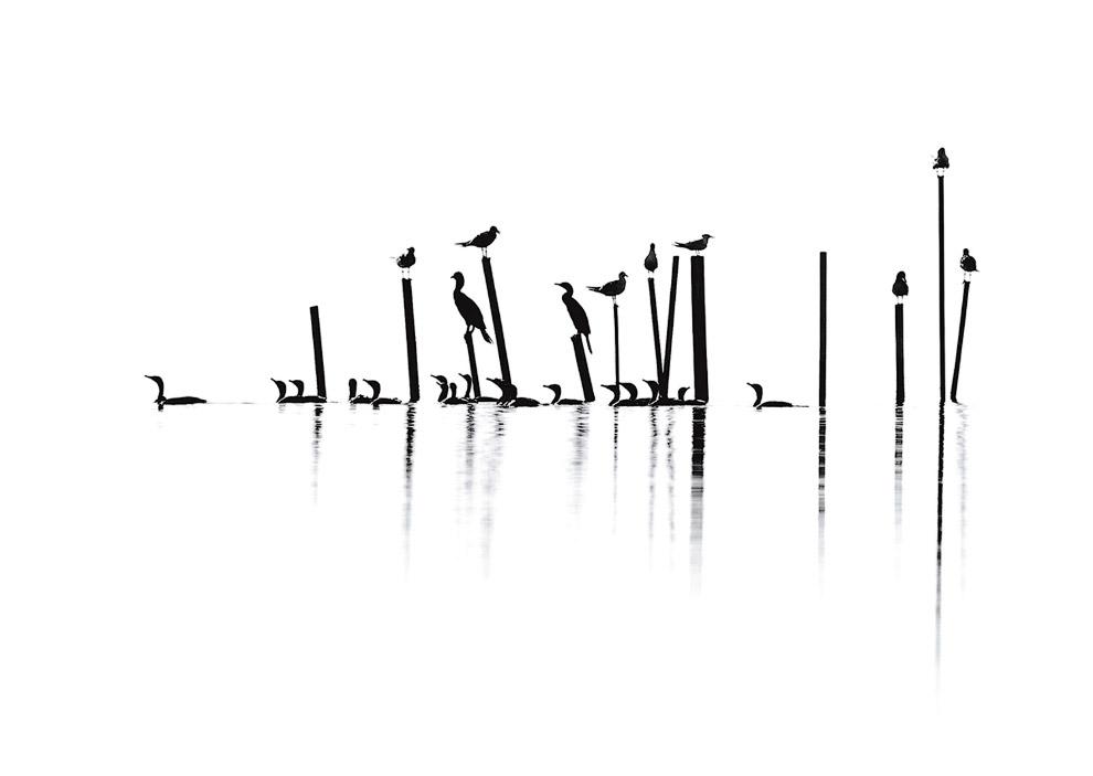чайки, ушастые бакланы, крачки