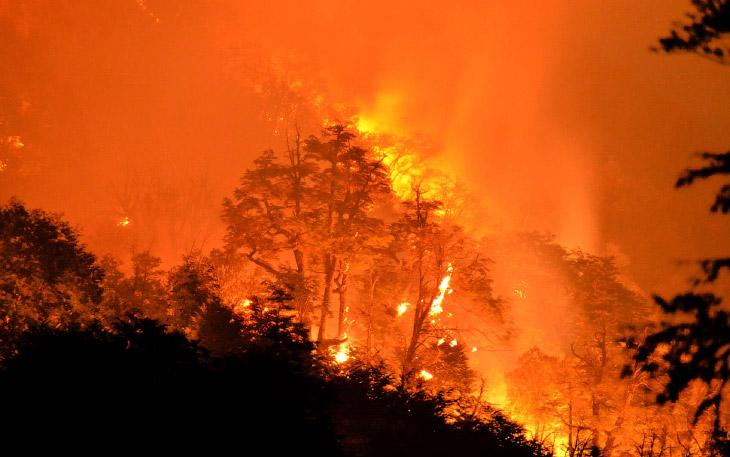 Лесной пожар в Национальном парке в Чили