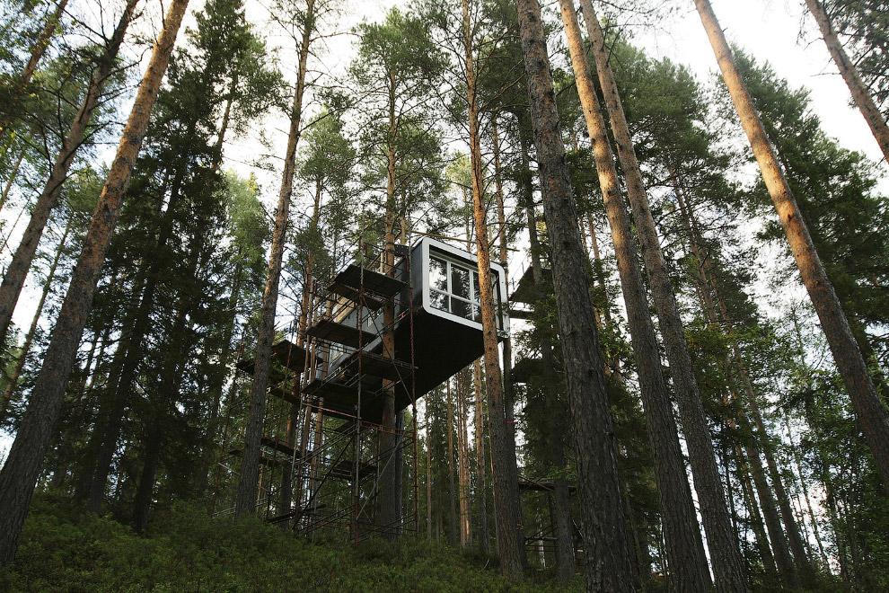 Хатина в лісі на півночі Швеції